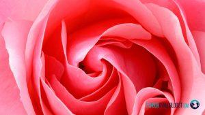 تزریق ژل به واژن در شیراز + آدرس و شماره تماس